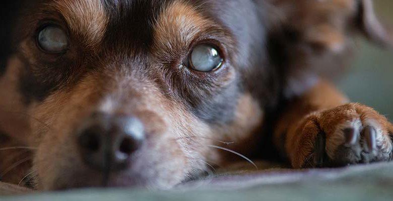 Zubehöre für blinde Hunde
