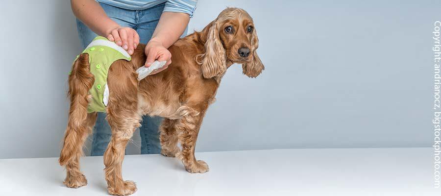 Windeln für ältere Hunde